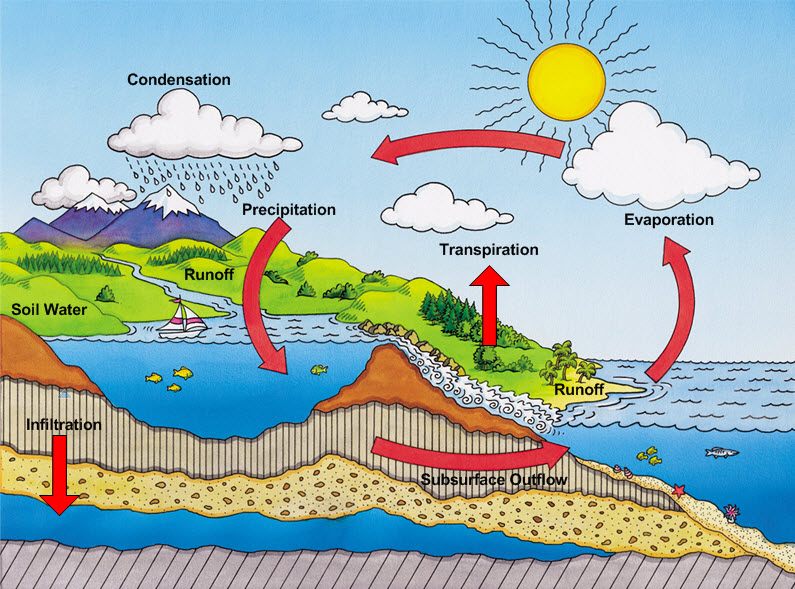 these diagrams show the processes of the water cycle